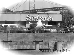 Seagull in front of Sinbads (PhotographyInsight) Tags: sf urban seagull baybridge rent fail birdbrain sinbads outofbuisness brhankin1 editinggod
