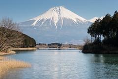 Early spring Fuji (shinichiro*) Tags: japan march spring fuji 日本 crazyshin shizuoka 2015 静岡県 田貫湖 富士宮市 abigfave laketanuki afsnikkor2470mmf28ged order500 nikond4s 20150312ds16282 201508gettyupload g18251901 16796514522