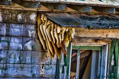 honey comb (Pattys-photos) Tags: idaho honey comb