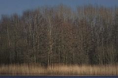 Tranquility (Marijke M2011) Tags: reflection reed water netherlands landscape outdoors tranquility silence abcoude marijkemooyphotography