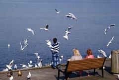 Feeding the birds (osto) Tags: denmark europa europe sony zealand dslr scandinavia danmark a300 sjlland osto alpha300 osto march2015
