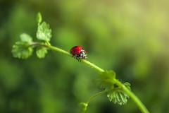 ladybug (Dreamer4423) Tags: red macro cute green canon insect 50mm nikon bokeh loveit 1d 7d ladybug 5d 6d dorr mark2 mark3