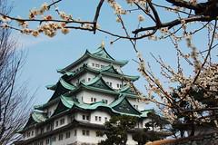 nagoya castle and cherry blossom (minamism) Tags: flower japan spring nagoya