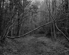 Tree archway and barrier (Jonathan Carr) Tags: bw white abstract black tree monochrome rural woodland way landscape arch fallen 4x5 barrier abstraction northeast largeformat 5x4 theguardswood