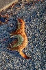 STOAT (tubblesnap) Tags: animal mobile dead photography photo phone traffic accident cellphone stoat