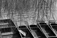 (frscspd) Tags: cambridge film water pentax takumar cam xp2 willow lookingdown ilfordxp2 58mm mx ilford filmgrain punt punts rivercam pentaxmx silverstreet silverbridge takumar58mm ilfordxp2400bw 20160205 16290005