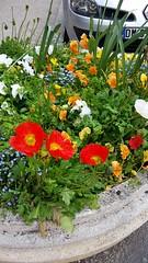 Spring Flowers (artnbarb) Tags: france cahors