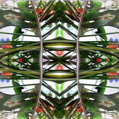 2016-05-21 symmetrical palms (april-mo) Tags: art collage mirror digitalart symmetry palm flip symmetrical flipping redandgreen collagecrazy experimentaltechnique