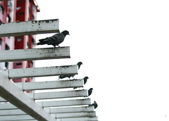 IMG_0097 (jumppoint5) Tags: city urban blur birds estate bokeh pigeons row hdb rochor