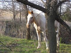 Echo April 2016 30 yrs (LynnK827) Tags: horse
