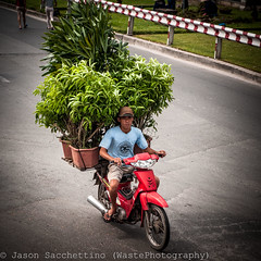 _DSC2828 (Jason WastePhotography) Tags: life street travel people nature field asia child vietnam land hanoi sapa hmong laocai