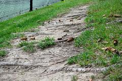 DSC_0043 (jonathanli12) Tags: bridge lake sports nature grass sign basketball pine landscape pond michigan logs peaceful greenery serene shrubs hdr