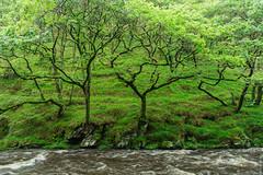 Watersmeet (loop_oh) Tags: uk greatbritain unitedkingdom lynmouth watersmeet eastlynriver