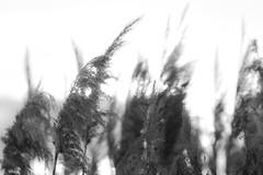 Soft Brushes (BHuij) Tags: park light sunset 2 lake nature water speed canon project lite photography bay harbor utah engagement emily state d mark 5 iii flash announcement ii 5d tanner dslr titanic iv speedlight kp mk provo 52 mkii 560 yn cardstock speedlite kopeck yongnuo 5d2 yn560