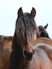 Paarden Horses (ellenanka) Tags: horses horse panasonic horsehead friesland dmc fryslan paard paarden fz50 noorderleech paardenhoofd