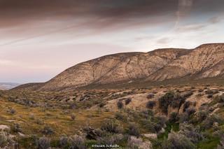 Early morning on the Elkhorn Range