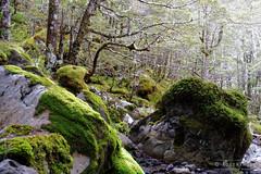 20150324-014-Mossy rocks-2 (Roger T Wong) Tags: trek outdoors nationalpark moss rocks walk hike boulders np bushwalk tramp nelsonlakes 2015 rogertwong sonyfe2870mmf3556oss sony2870 sonya7ii sonyilce7m2 sonyalpha7ii