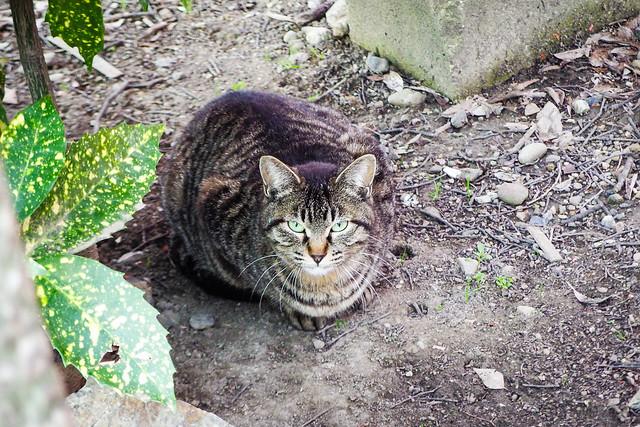 Today's Cat@2015-04-03
