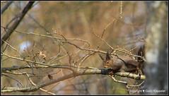 Eichhrnchen geniesst die Sonne (Jolanda Donn) Tags: fauna nager tier eichhrnchen sugetiere pelztier canoneos650d