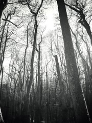 Natchez Trace (Wanderlust.jpg) Tags: life trees sky blackandwhite bw art love nature water monochrome beauty mississippi outside photography day culture swamp soul nocolor cypressswamp iphone6