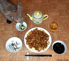 Seara (sea rabbit). Photograph by Dr. Takeshi Yamada. 20120305 016 Grilled Minced Chicken with Chinese Cabbage. Steamed Rice with Nori. Wakame Soup. Pickled Bok Choy. Chinese Reishi Mushroom Tea. (diningwithsearabbits02) Tags: ny newyork sexy celebrity art hat fashion animal brooklyn painting asian coneyisland japanese star costume tv google king artist dragon god cosplay manhattan wildlife famous gothic goth performance pop taxidermy cnn tuxedo bikini tophat unitednations playboy entertainer takeshi samurai genius mermaid amc mardigras salvadordali unicorn billclinton billgates aol vangogh curiosities sideshow jeffkoons globalwarming takashimurakami pablopicasso steampunk yamada damienhirst cryptozoology freakshow barackobama seara immortalized takeshiyamada museumofworldwonders roguetaxidermy searabbit ladygaga climategate minnesotaassociationofroguetaxidermists  leonardnimoyfood