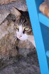 Cretan cat (kimbenson45) Tags: blue pet animal cat greece crete taverna at
