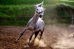 Crazy Horse de salon ! (Fabisa00) Tags: horse cheval crazy fou
