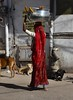 (Rick Elkins Trip Photos) Tags: jodhpur rajasthan india woman walking carrying pot pots head dog building architecture