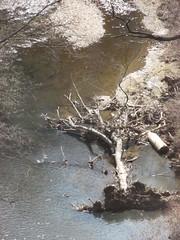 Down and Out (bakpacker) Tags: trees washingtondc fallen rockcreek deadtrees
