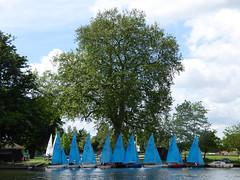 Lensbury Sailing Club (Gilder Kate) Tags: thelensbury sailingclub dinghies bluesails sailing sails sail riverthames thethames thames teddington middlesex kingston panasoniclumixdmctz70 panasoniclumix panasonic lumix dmctz70 tz70