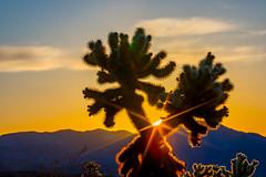 Good Morning JT NP (Shi Yu) Tags: california cactus sun sunrise sandiego places sunburst burst joshuatreenationalpark shiyuphotographyyushiphotographysunstonephotography