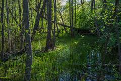 4Y1A7945 (Ninara) Tags: sea summer nature finland island helsinki kes vallisaari historiakohde sotilassaari