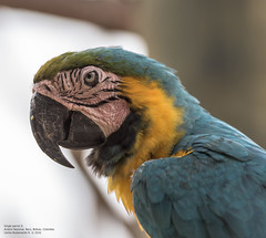 Single parrot II (Magic life gallery) Tags: colombia parrot bolvar co