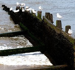 segulls cromer edit 2 (steviequick) Tags: sea seagulls seascape beach birds groyne