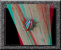 False Potato Beetle Backside - Anaglyph 3D (DarkOnus) Tags: macro beautiful closeup bug insect stereogram 3d phone pennsylvania butt beetle cell anaglyph stereo potato hyper backside thursday stereography buckscounty false huawei leptinotarsa ttw hyperstereo bbbt juncta mate8 beautifulbugbuttthursday hbbbt darkonus