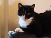 Koty Felix & Kocio (arjuna_zbycho) Tags: pet cats pets cute animal animals cat blackcat kitten feline chat felix kitty kittens tuxedo gato tuxedocat gatto katzen haustier kater tier gattini hauskatze kocio