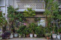 "plants growing 15 years (katarzyna_os) Tags: plants holiday sigma greece crete ellada agiosnikolaos ""nikond7000"" katarzynaos katarzynaostrowska"