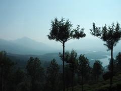 Indien - Teeplantagen Westghats (ulfinger) Tags: landwirtschaft kerala landschaft tee indien munnar stausee plantagen westghats