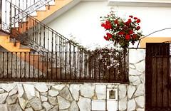 Ríete de las calles torcidas de la isla (Therese Trinko) Tags: granada andalucia spain españa street flowers redroses lines europe travel