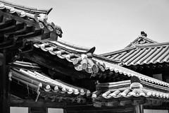 () (Anna Kwa) Tags: love beauty nikon rooftops cities places roofs hidden seoul d750 always southkorea royalpalace   joseondynasty gyeongbokgungpalace 1395 northernpalace my baekjiyoung  afsnikkor70200mmf28gedvrii annakwa rooftopprince