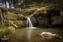 Still Life at three shires head (Simon/Winfield) Tags: longexposure waterfall sheep derbyshire sigma threeshireshead d7100 leebigstopper