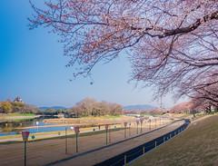 PhoTones Works #6548 (TAKUMA KIMURA) Tags: japan cherry landscape spring scenery natural    okayama kimura    takuma    photones em5mark2 asahikawa