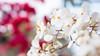 盛放 (jerryccc333) Tags: panasonic flowershow 2015 花展 維園 香港花卉展 盛放 大光圈 著迷 dmcgx7 olympusde12mmf20