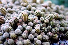 Cactus, RHS Wisley