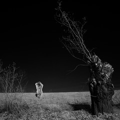 few branches left (old&timer) Tags: male composite nude blackwhite model background surreal infrared deviantart