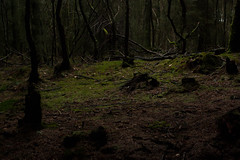 Photo of Forest Clearing