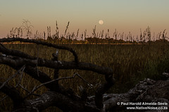 Full Moon in The Okavango Delta, Botswana