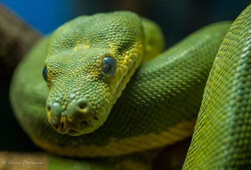 Reptile House - Healesville Sanctuary
