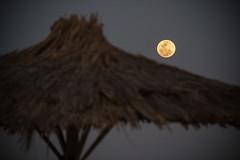 IMG_7992 (m.damert) Tags: moon night dark hotel egypt el sunshade parasol quseir