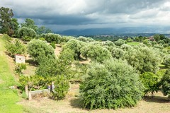 (Mickey Katz) Tags: travel vacation italy house green beautiful beauty clouds photo amazing europe italia view cloudy awesome olive culture dramatic tourist tuscany oliveoil breathtaking toscania olivetree bestshot supershot flickrsbest amazingphoto abigfave anawesomeshot flickrlovers